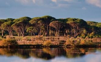 Strofilia Forest