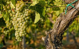 the best way to check these distinct and flavoursome wines out is by going on holiday to this beautiful land.