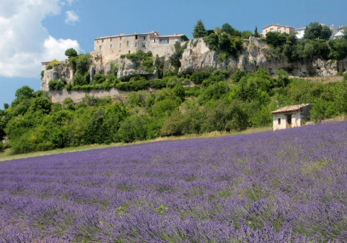 Perched high along a ridge that overlooks a wide and verdant valley, the village of Sault in Provence is an exceptionally pretty area of France to visit all year round. This old fortified village is however especially beautiful in the summer when the many lavender fields that Sault overlooks come into full bloom. So flourishing and rife are Sault's lavender fields that these fragrant flowers have long been used to make cosmetics and soap in Provence. Asides beauty products, the lavender of Sault is used as an ingredient in Provencal cuisine, with lavender honey being an essential ingredient in the region's legendary lavender sorbets. So important is this evergreen shrub in this ancient village that a Lavender Festival is held in Sault each year. This year will see the 26th edition of the Lavender Festival held in Sault. The festival will take place on Monday 15th August. Each year the festival attracts more and more visitors, eager to witness this beautiful scented flower enveloped by silvery foliage be creatively utilised in authentic dishes, perfumes and other unique products. The festival highlights include a sickle cutting competition, whereby visitors can participate in the 19th century tradition of using sickles to cut up produce. Lavender enthusiasts can purchase lavender products from the many stalls present at the festival. There is also a book fair, pony rides for children, a painting exhibition and musical activities. With picturesque and laid-back squares, a handful of quality cafes and bars, and being surrounded by carpets of lavender fields, backed by a dramatic mountainous landscape, there are plenty of reasons to visit this unspoilt village in Provence.