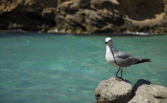 Reasons why Mallorca is a birdwatchers' paradise
